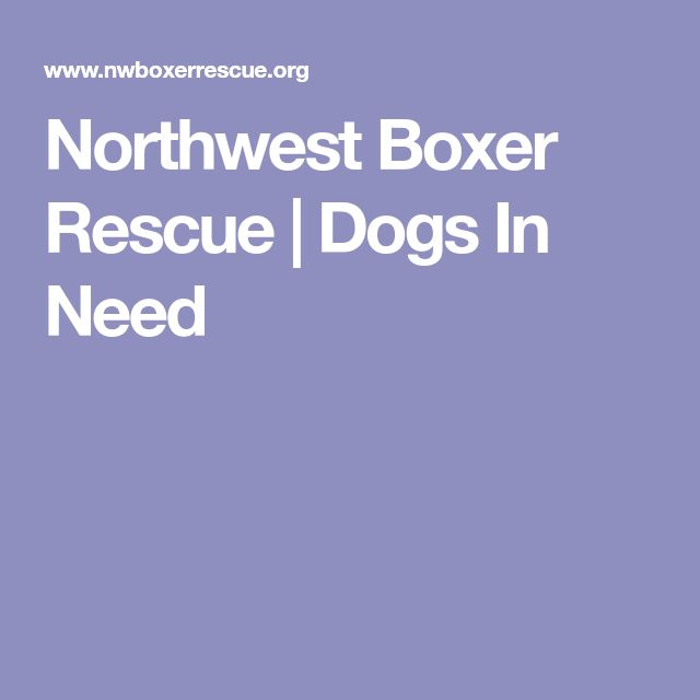 PACIFIC NORTHWEST STATES (HOME IN WOODINVILLE, WA) - NORTHWEST BOXER RESCUE -  | Dogs In Need