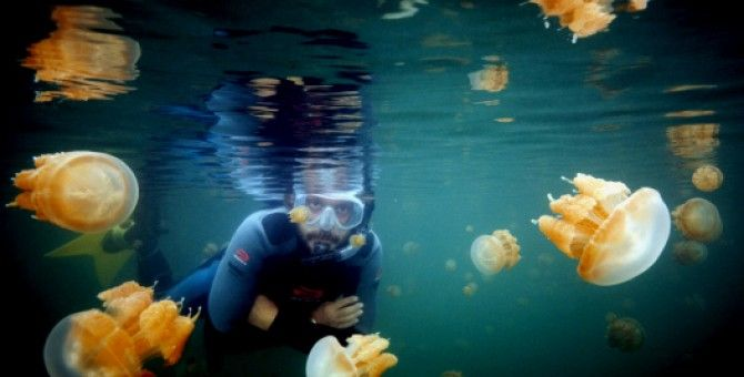 Interested swimming with jellyfish