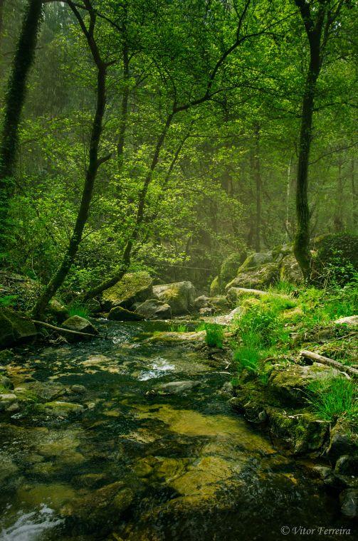 335 besten wald natur bilder auf pinterest wald zauberwald und landschaften. Black Bedroom Furniture Sets. Home Design Ideas