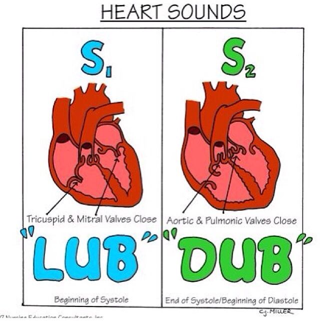 Heart sounds - Lub dub