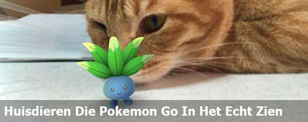 Deze mensen zijn ervan overtuigd dat hun huisdier Pokemon in het echt kan zien (37 foto's)