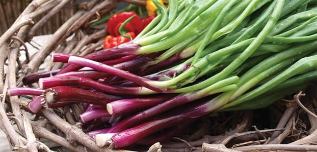 SPRING ONION RED | The Diggers Club
