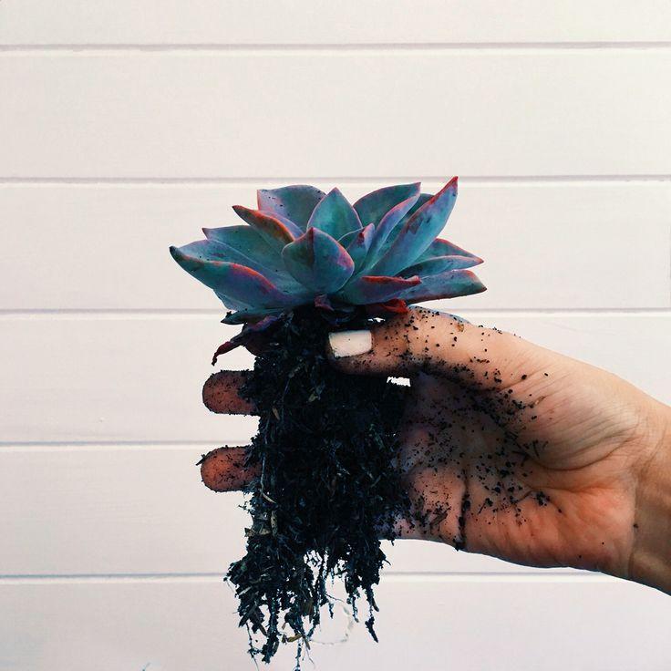 Sembrar plantas