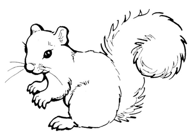 Coloring pages of a squirrel ~ Cute Squirrel Coloring Pages | Squirrel coloring page ...