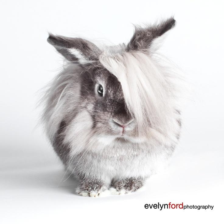 Coolest bunny ever, Einstein