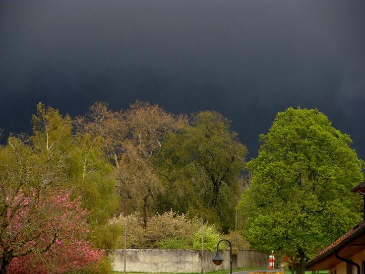 Arbres au printemps devant le Jura sombre, printemps 2012