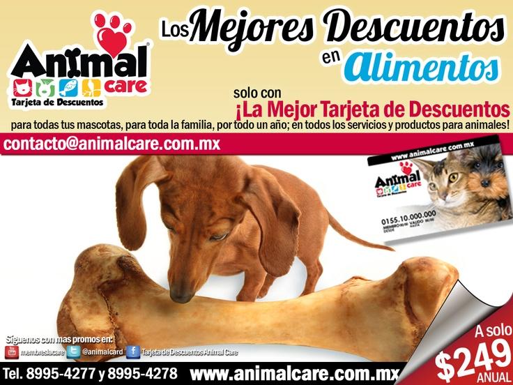 EN ALIMENTO al presentar la TARJETA DE DESCUENTOS ANIMAL CARE obtienes los mejores descuentos del 10% al 50% en todos los servicios y productos para mascotas, con toda la RED de PROVEEDORES. Checa todos los descuentos en www.animalcare.co... Llámanos al 8995-4277 y 8995-4278  Escribenos: contacto@animalcare.com.mx