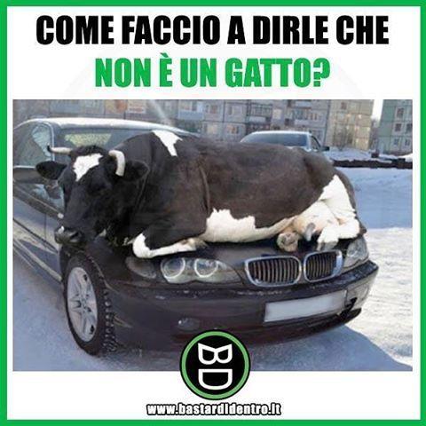 Tu che parole useresti? Seguici su youtube/bastardidentro #bastardidentro #auto #mucca www.bastardidentro.it