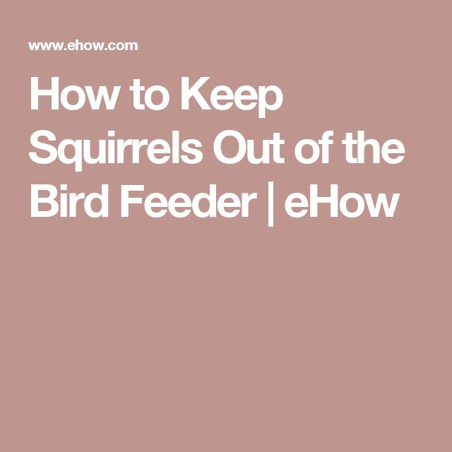How to keep squirrels out of the bird feeder bird feeders the birds and squirrel for How to keep squirrels out of my garden