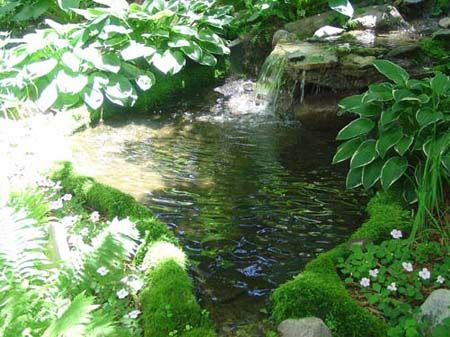1000 images about rock a roll pond liner on pinterest for Garden pond edging