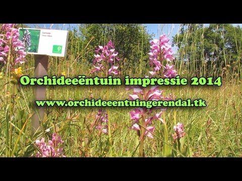 Impressie Orchideeëntuin