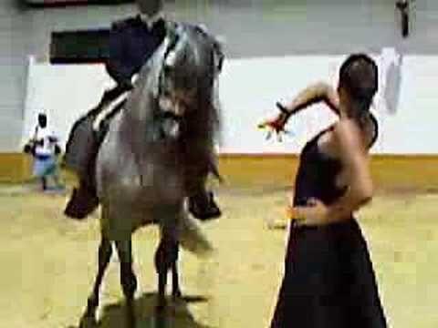 uno d los homenajes dl dia fue este precioso baile d una bailaora acompañada d un caballo cn la musica d la JUrado