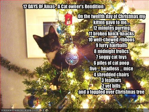On the twelfth day of Christmas my kitten gave to me...: Christmas Cats, Holiday, Animals, Funny, Crazy Cat, Cat Lady