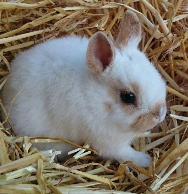 Kaninchen Kaufen Munchen Zwergkaninchen Kaufen Munchen