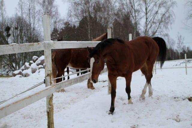 http://www.kotivinkki.fi/blogit/olgan-kotona/tarhaan