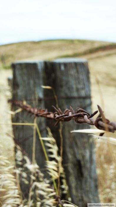 .barb wire.