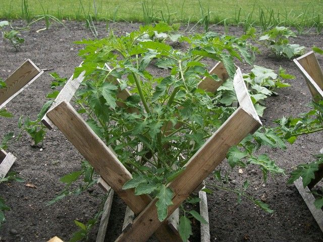 tomato cradles or for vine crops - Vegetable Garden Ideas Minnesota