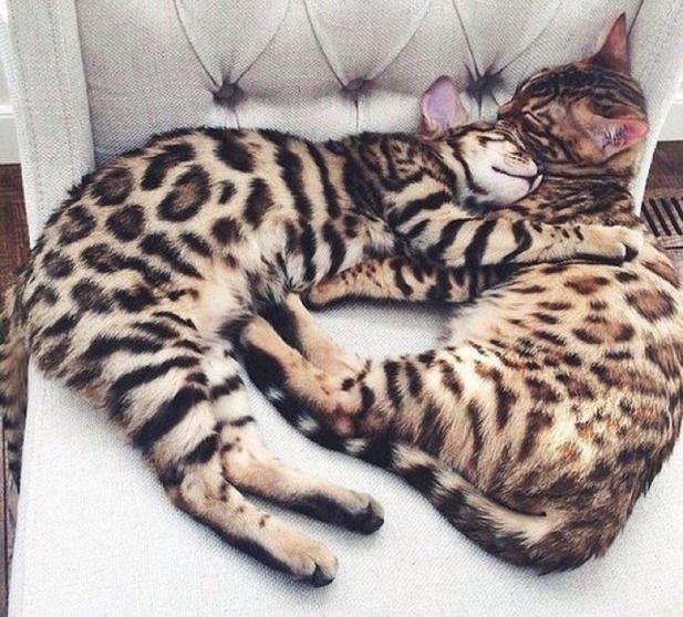 Snuggle time//