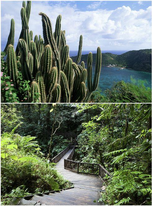 Un peu marre du format tout-inclus? Envie de conjuguer soleil avec culture et gastronomie? Justement, il y a la Guadeloupe.