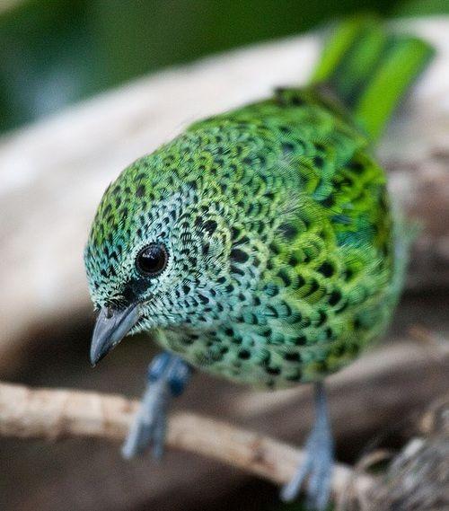 Oiseau vert                                                                                                                                                                                 Plus