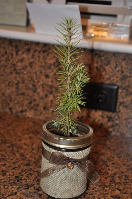 Tree gift