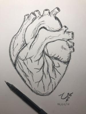 Human heart drawing by allisonn