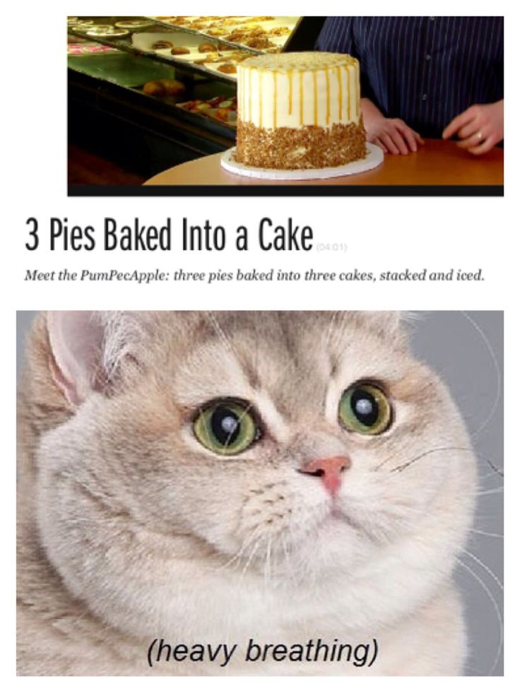 Heavy breathing cat 3 pies baked into cake.... @foodnetwork