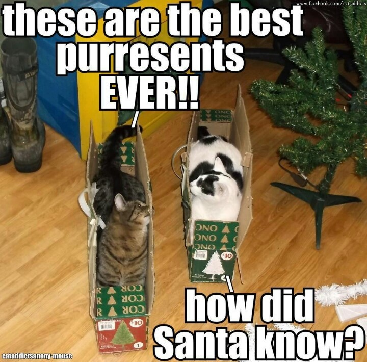 72 best images about Funniest Christmas memes on Pinterest ...