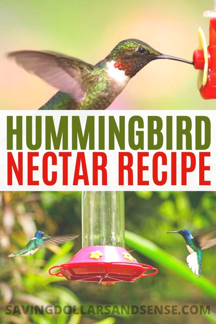 Diy This Easy Hummingbird Nectar Recipe Hummingbird Food Nectar
