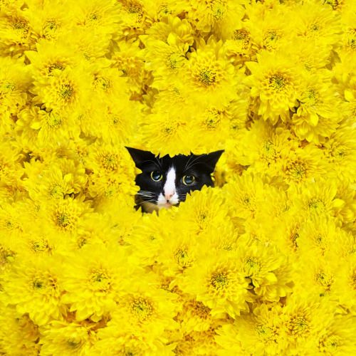 """You can't see me... I'm a flower."""