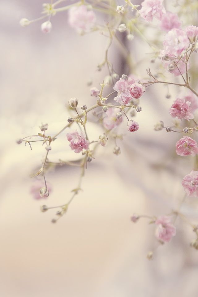 faded pink blossoms