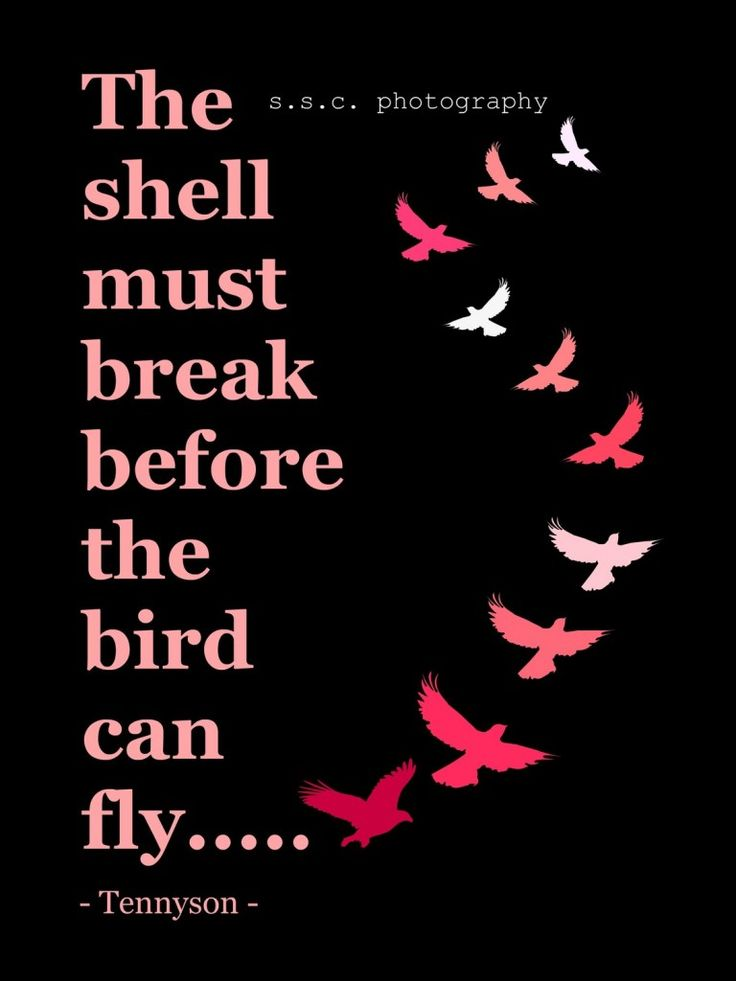 put a bird on it quote by tennyson: Tennyson Quotes, Thoughts, Flying, Birds Quotes, Shells, Wisdom, Things, Inspiration Quotes, True Stories