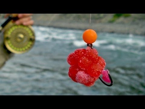 1000 images about fishing on pinterest trout bait rigs for Best bait for salmon fishing in the river