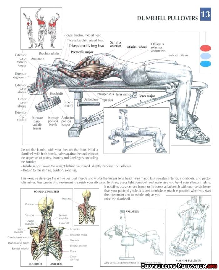 Dumbbell Chest Workouts For Men: Training Anatomy - Chest - Dumbbell Pullovers