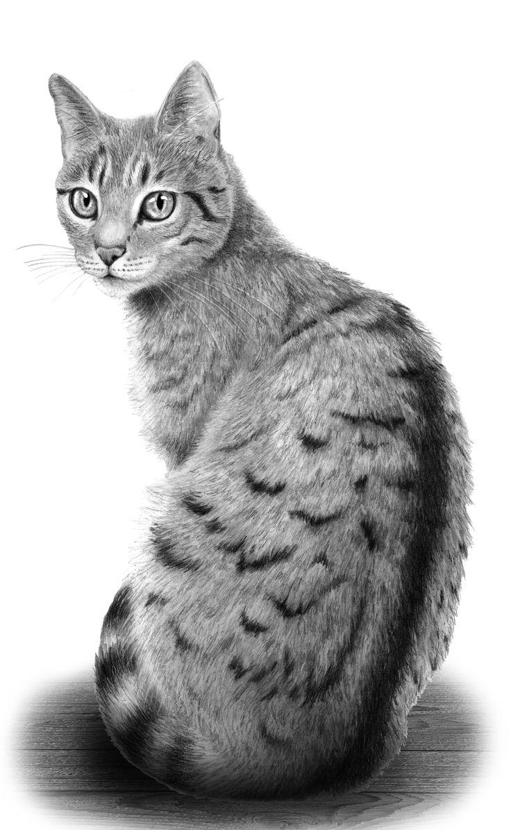 ber ideen zu katze zeichnen auf pinterest zeichnen tiere zeichnen und zeichnen lernen. Black Bedroom Furniture Sets. Home Design Ideas