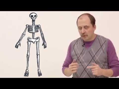 Мусорное биомоделирование. Кости. Часть 1 - Состав кости - YouTube