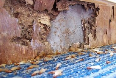 click here to find out more about Termite Treatments & Inspection In Arizona
