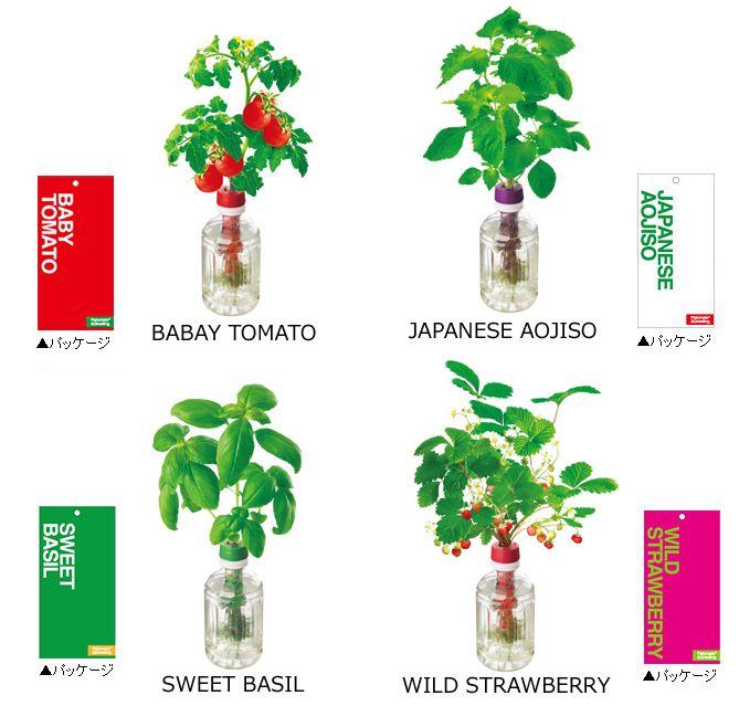 ペットとお水だけで野菜の発芽から収穫まで手軽に体験できます。。【送料無料】【普通郵便】【人気プチギフト】ペットマト・グリーティング   プチトマト 青じそ ワイルドストロベリー スィートバジル