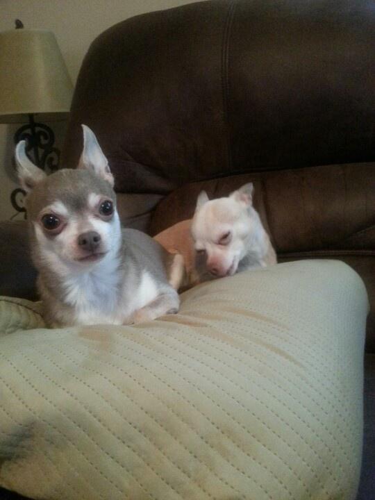 Crazy ears Rocco:-D