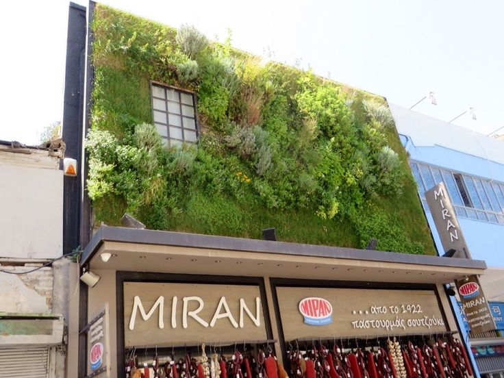 Miran_Spice_market_Athens_Greece.  The herbs are growing on the wall of the Miran herb and spice shop in Athens.