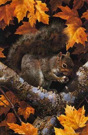 Why do squirrels lick leaves 10