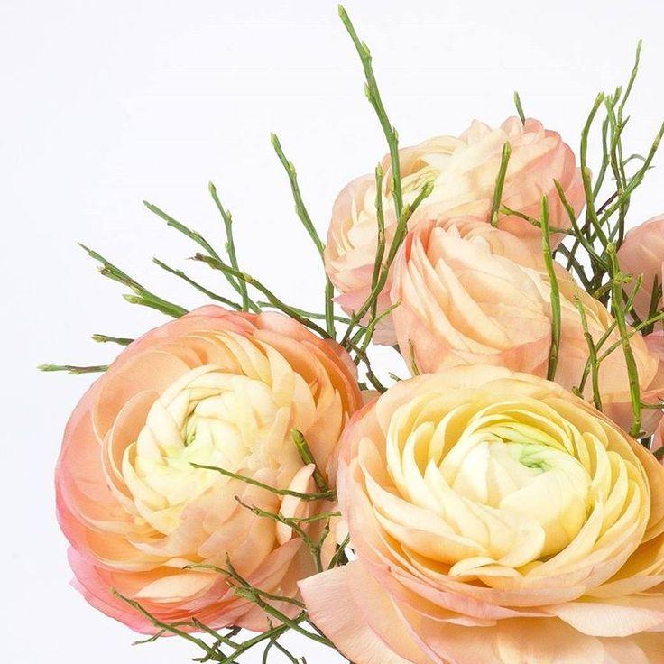 Peachy ranunculus bouquet, so delicate! | Bouquet de ranúnculos cor de pêssego, muito delicado!