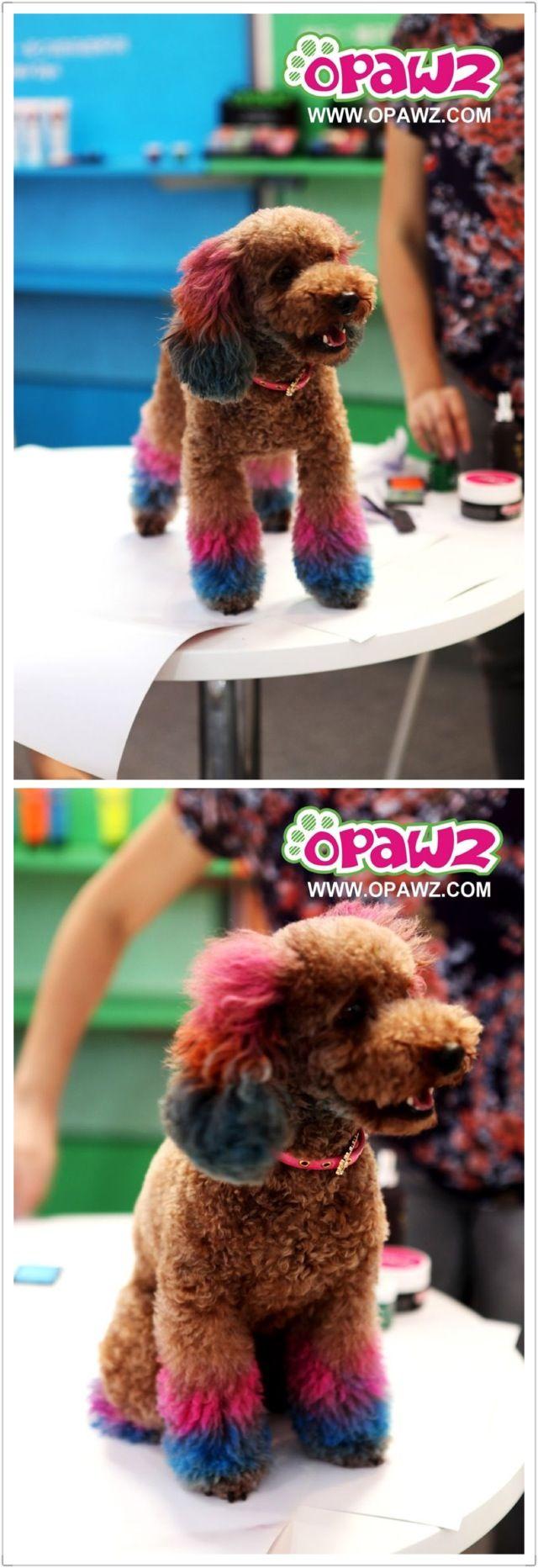OPAWZ anticipated Pet Fair Asia; opawz.com supply pet hair dye,pet hair chalk,pet perfume,pet shampoo,spa products