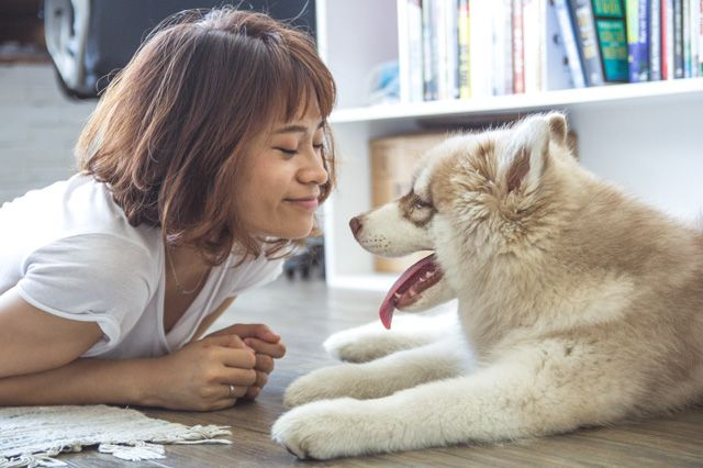 Pet Sitting: ΠΡΟΣΟΧΉ-Συμβουλές για νέους pet siters
