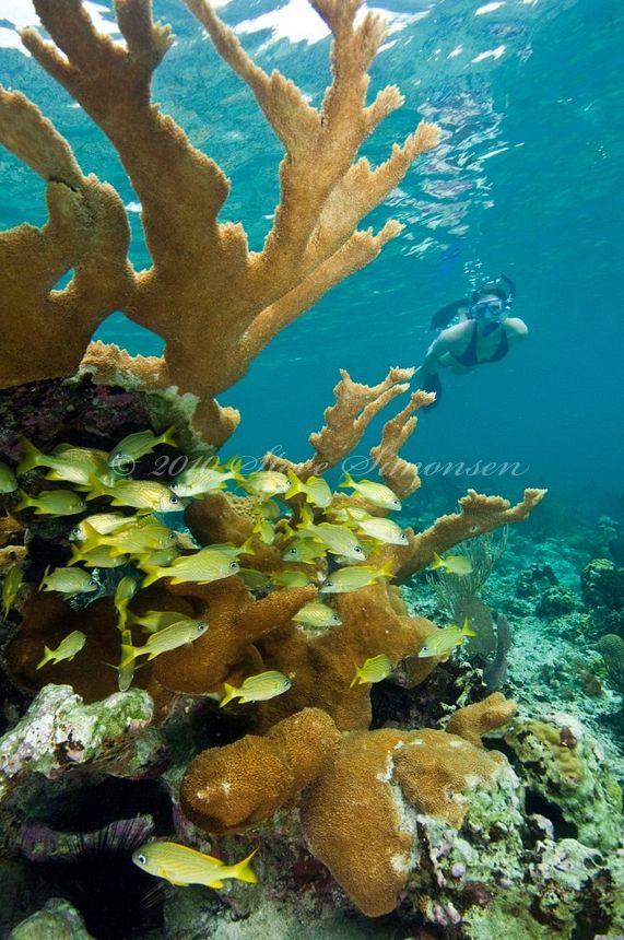 Virgin Islands National Park by © Steve Simonsen