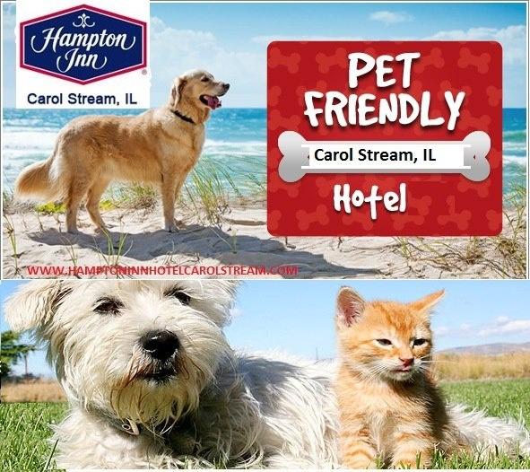 Discover A Pet Friendly Hotel In Carol Stream Il Hampton Inn