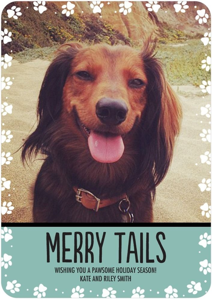 Merry tails - Share Your Photos With Friends And Family