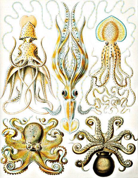 ocean amimals Squid Octopus  sea creatures monster science CLIP ART COLLAGE sheet. $2.50, via Etsy.