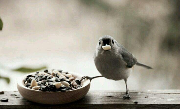 Mejores 70 imágenes de ~Birds~ en Pinterest   Pájaros bonitos ...
