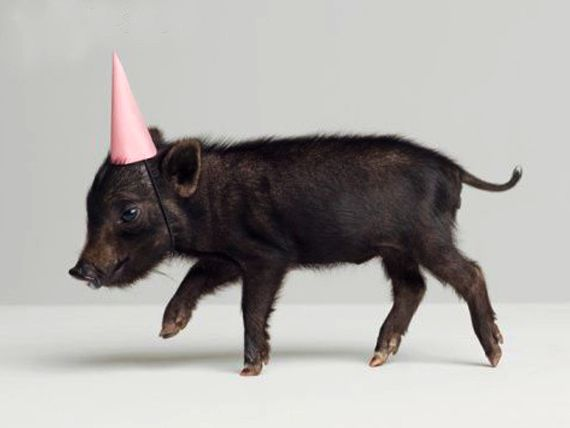This little piggy is going to a party!